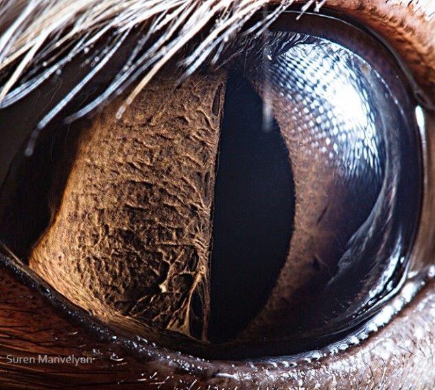Macro Photography of Animal Eyes