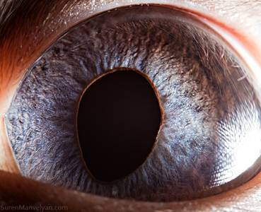 Macro Photography of Animal Eyes