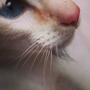 Cat macro / by vile666ette