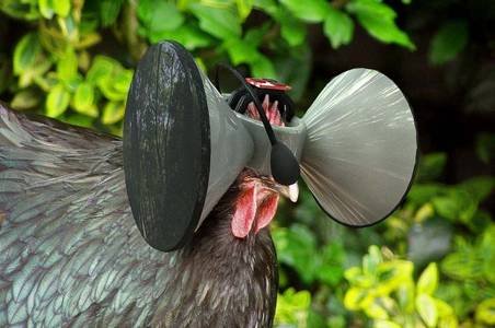 These Virtual Reality Headsets Make Farmed Chickens Believe They Roam Free | I Fucking Love Science