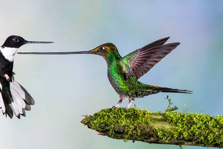 Creative Review - Wildlife Photographer of the Year 2014