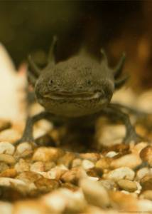 Head Like an Orange - Axolotl
