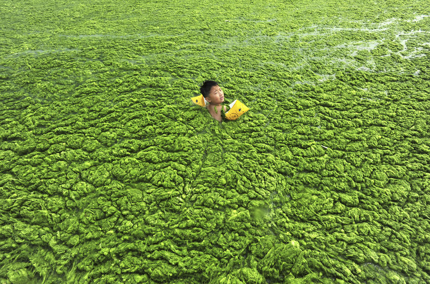Boy Swims In Algae-filled Water, Qingdao, Shandong