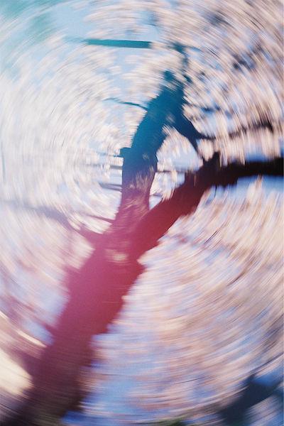 THE TREES GREW EMOTIONS - Takuroh Toyama Photography