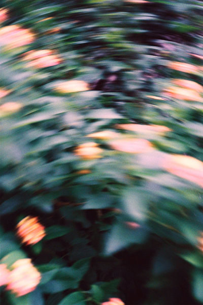 THE TREES GREW EMOTIONS - Takuroh Toyama Photography