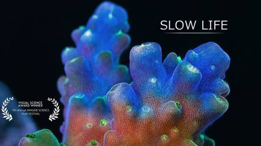 Slow Life on Vimeo