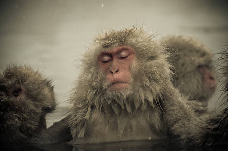 Snow Monkeys Nagano Japan on Behance