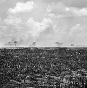 everyday_i_show: photos by Brandon Thibodeaux
