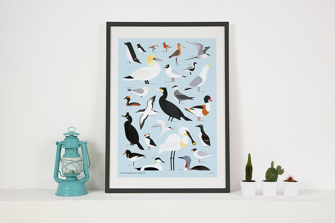 Build - British Sea Bird Chart on Behance