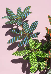 Gestalten | Wonderplants by Sarah Illenberger