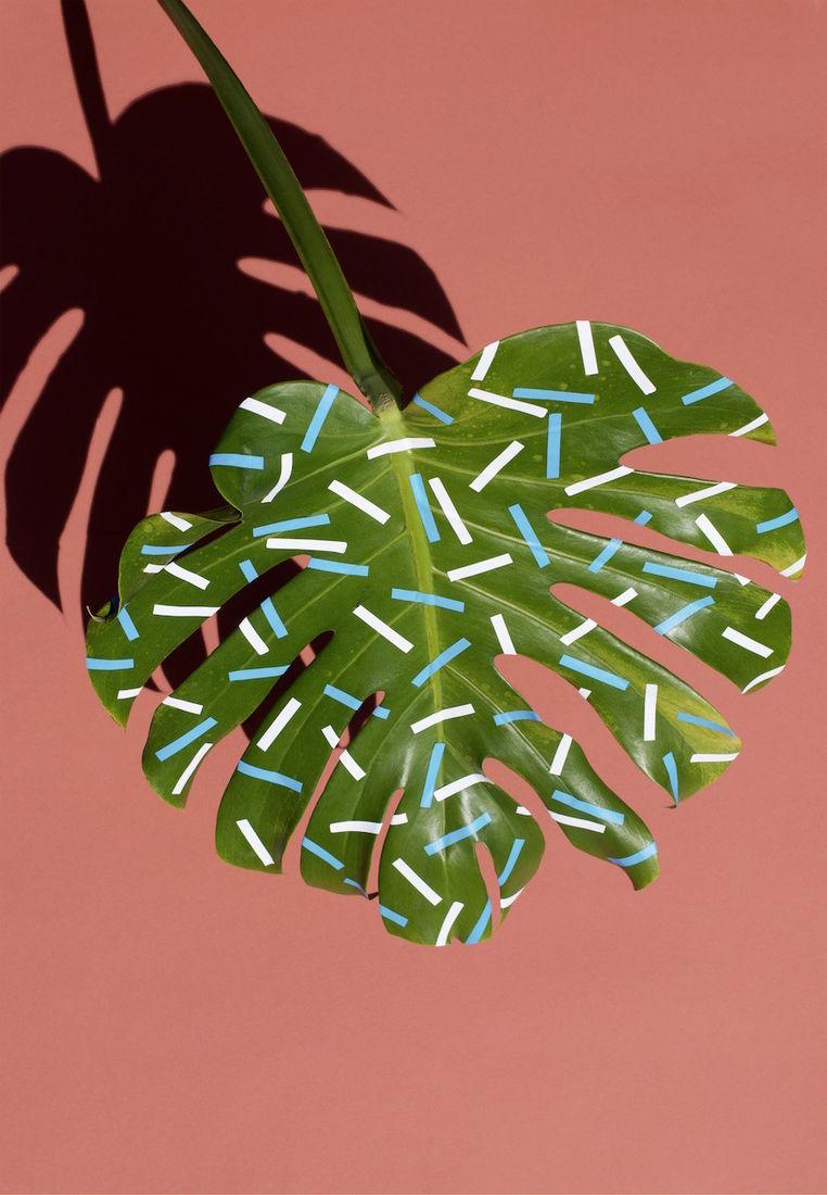 Gestalten | Wonderplants by Sarah Illenberger