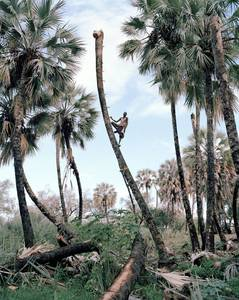 Kyle Weeks Portrays the Men Who Extract Sap from Namibia's Palms | Fotografia Magazine