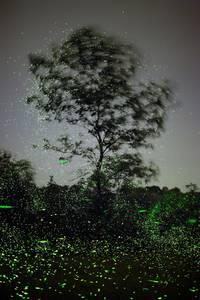 luciole-mauney-02 - La boite verte