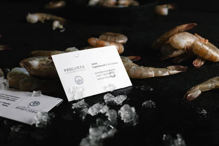 Procumar on Behance