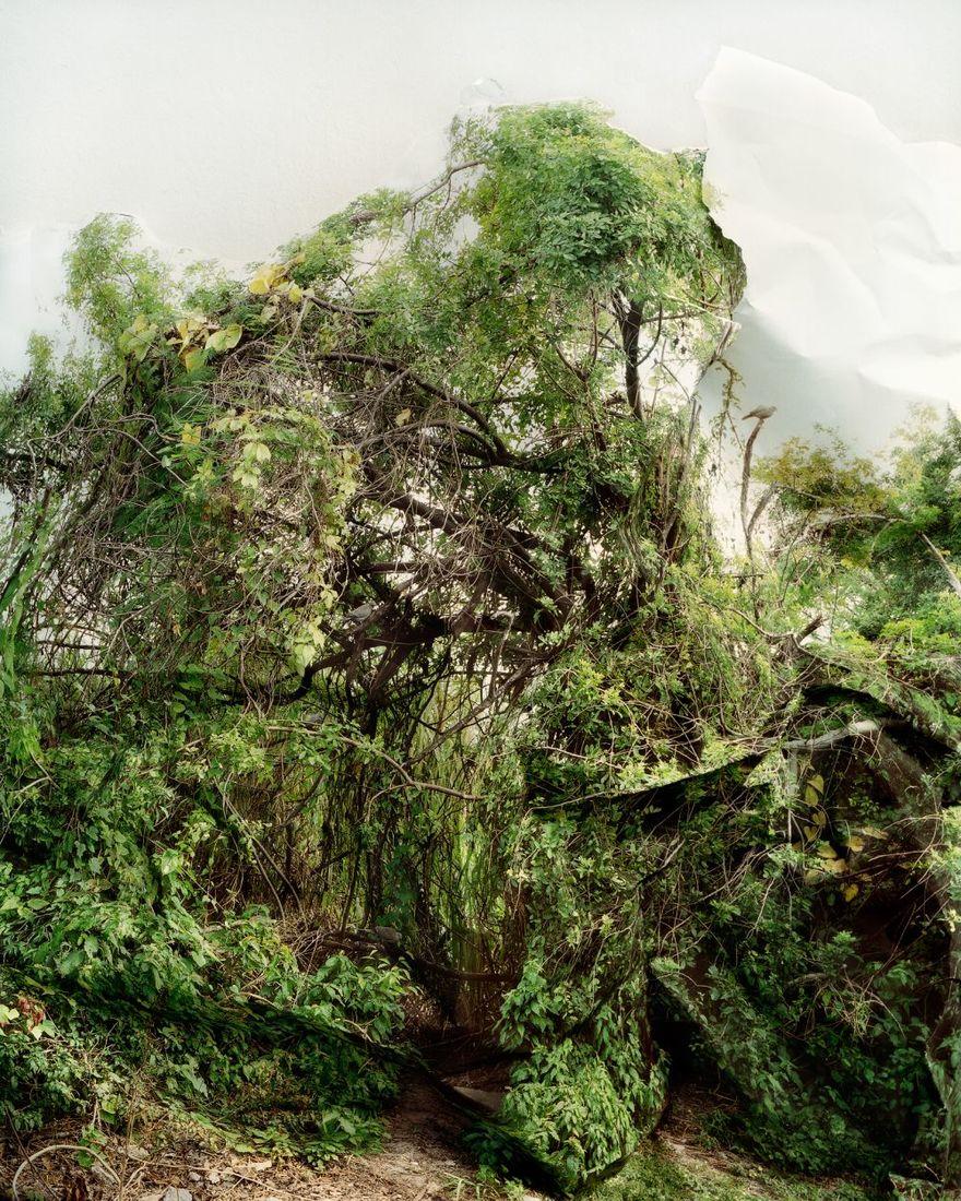 Laura Plageman  / Response, Land