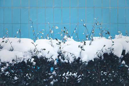 neige - ajda kara