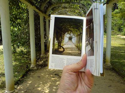 Flickr Photo Download: Encadré (Jardim Botânico, Rio de Janeiro)