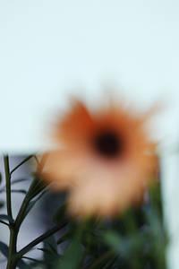 Flowers in Town - www.oliviafremineau.com