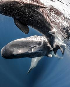 The Man Who Talks to Sperm Whales  Avaunt Magazine