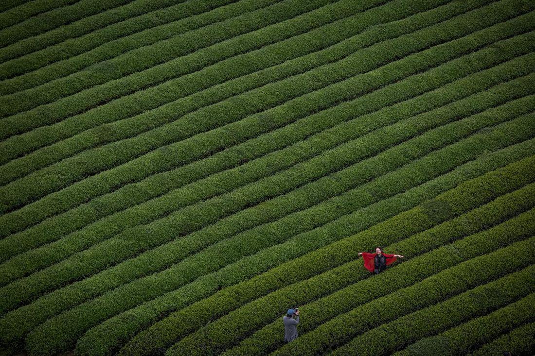 Homeland of tea - The Boston Globe