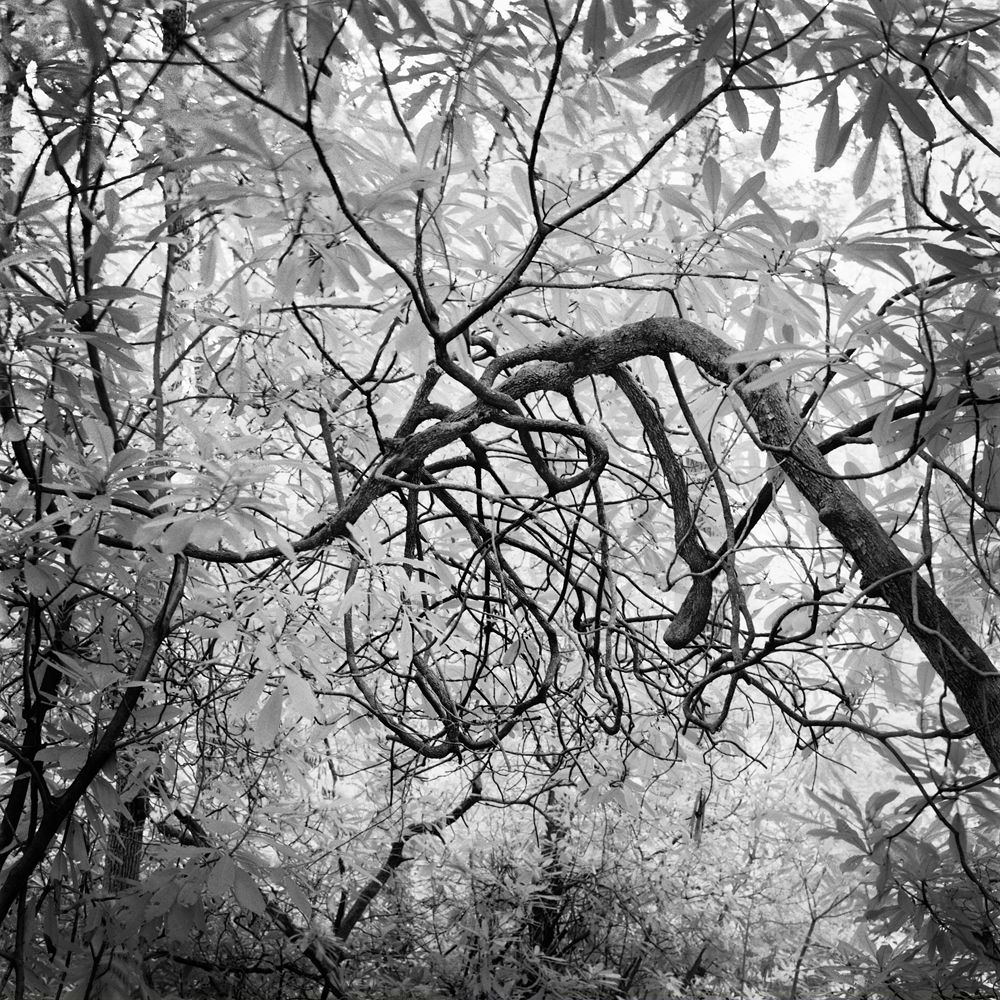 BENJAMIN DIMMITT BENJAMIN DIMMITT Photography
