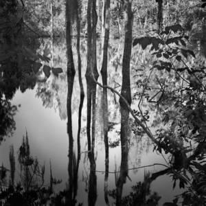 Primitive Florida (2004-16) — BENJAMIN DIMMITT