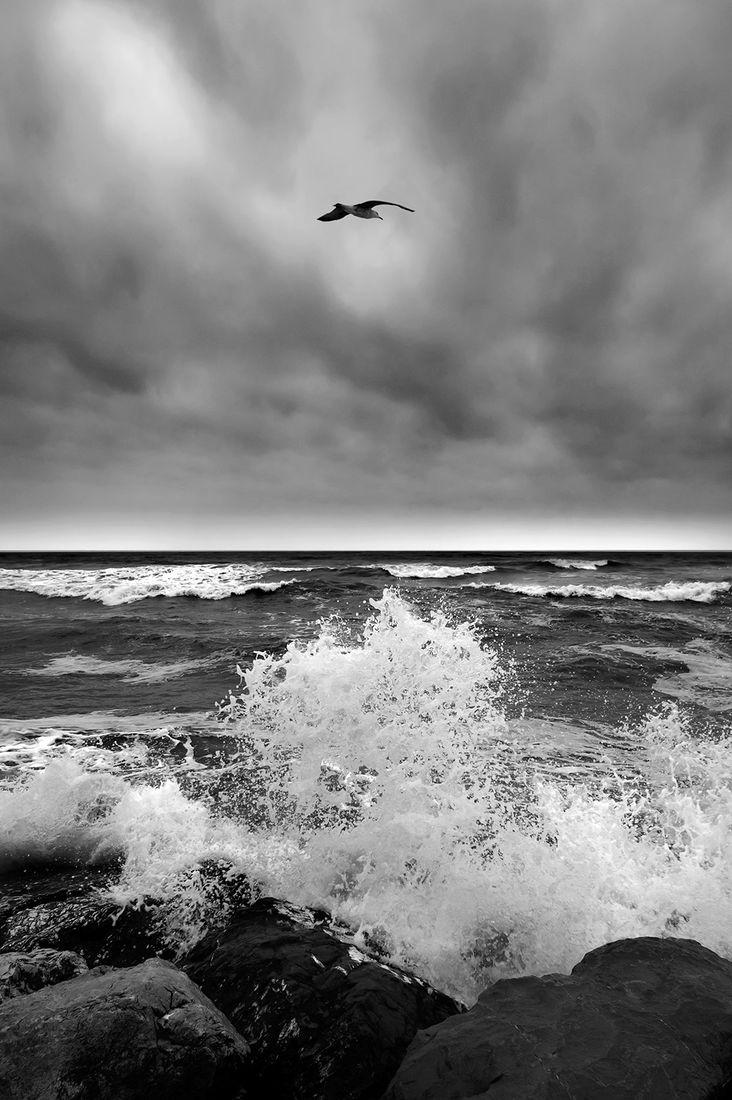 MATER / Gustav Willeit
