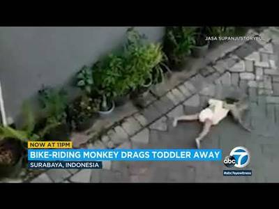 (15)Monkeyonbikesnatchestoddleroffbenchdragschildawayinviralvideo-YouTube