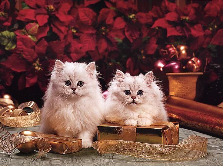 cats.jpg 736×548 pixels
