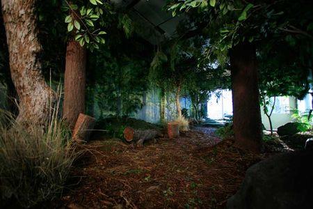 forest.jpg JPEG Image, 800x533 pixels